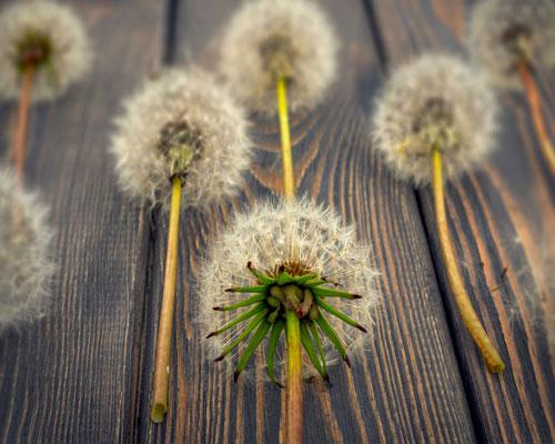 Alergias sazonais: Saiba como evitar alérgenos em casa