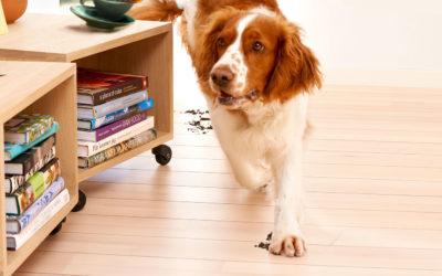 5 dicas de limpeza para casas com pets